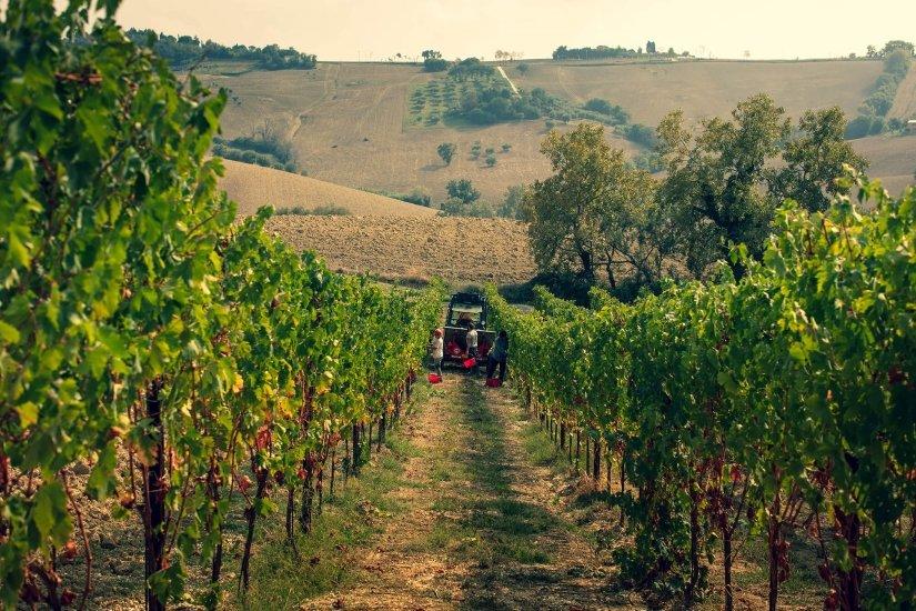 La disputa sui disciplinari dei vini siciliani finisce al Consiglio di Stato
